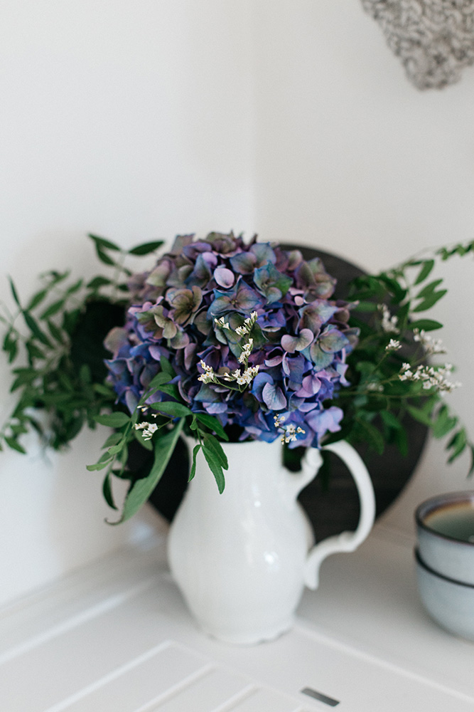 modrá hortenzia