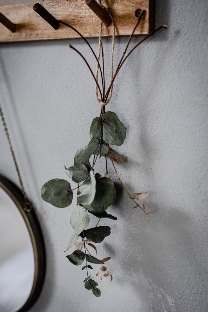 sušený eukalyptus